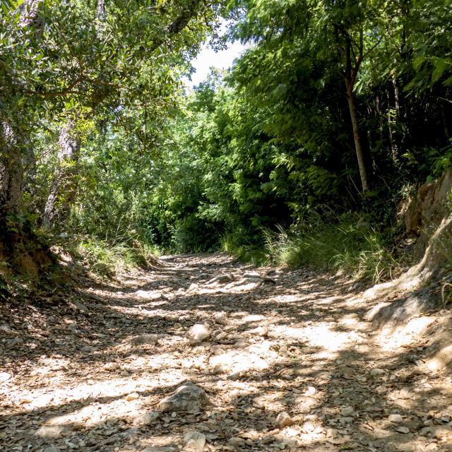 Massif Des Maures Grimaud Var Provence (18)