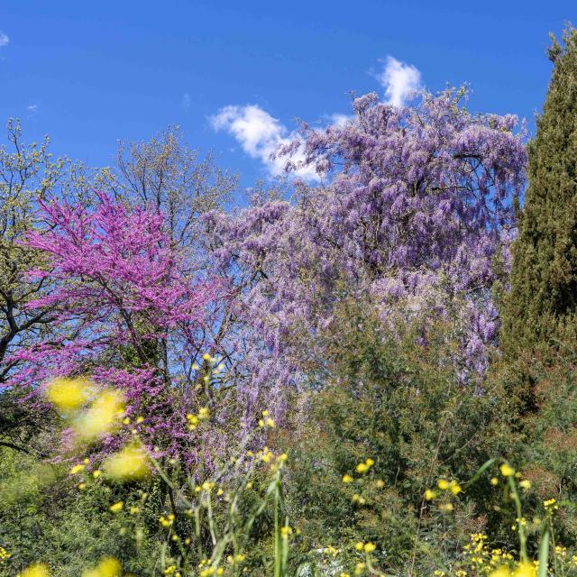 Massif Des Maures Grimaud Var Provence (39)